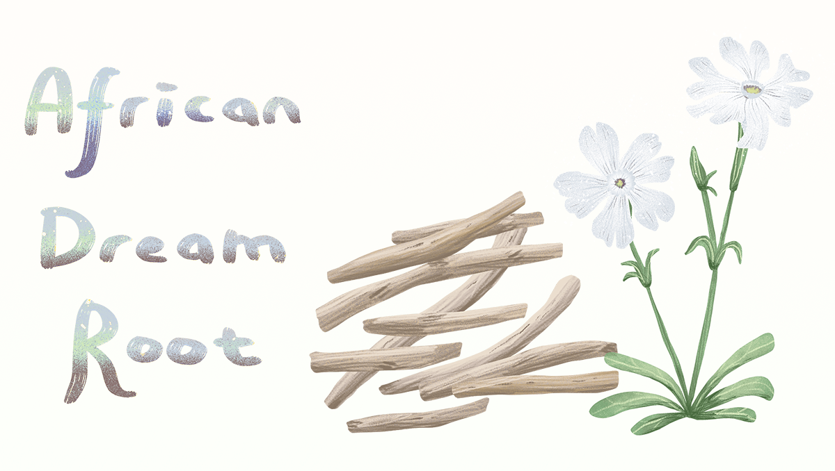 learn about African Dream Root - Silene capensis
