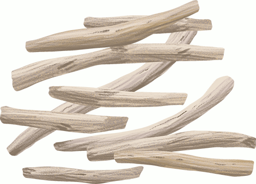 silene capensis root